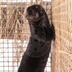 Mink (Scanblack)