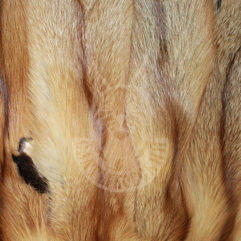 Fox pelt dressed (Red)