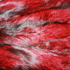 Fox pelts dressed, coloured (Red)