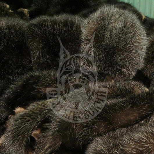 Sable pelts dressed, Saltykovsky-1 (Gray)