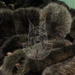 Sable pelt dressed
