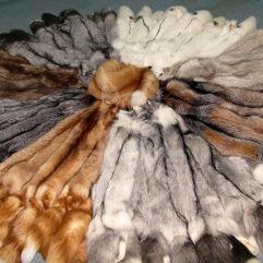 Fox pelt dressed